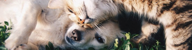 Preparing for Emergencies: What Can You Do to Protect Your Pets?